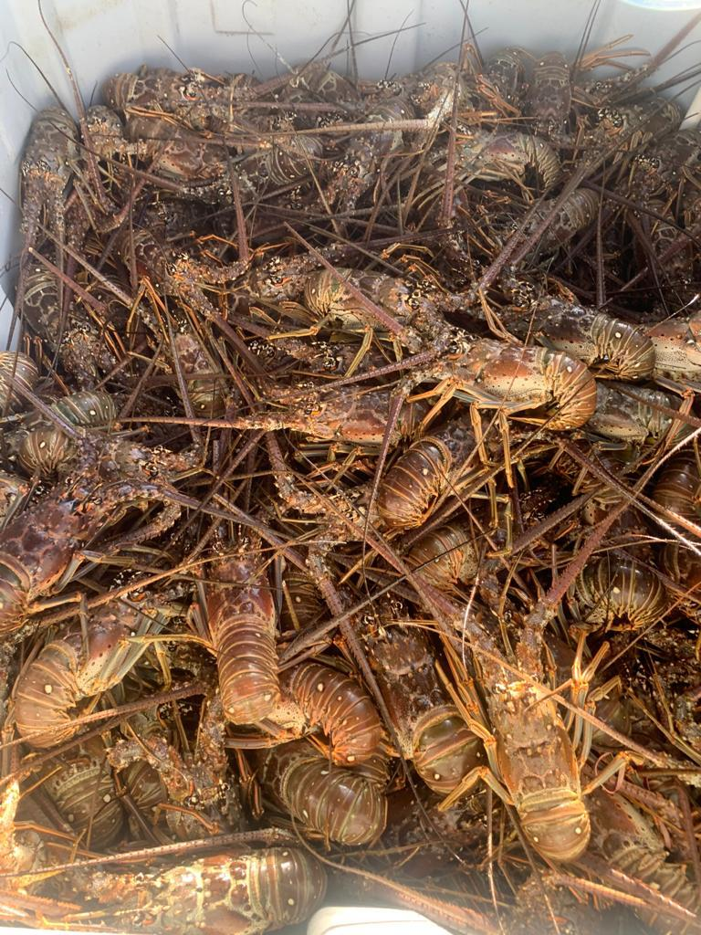 Best_Place_To_Buy_Frozen_Seafood_In_Marathon_Fresh_Lobsters