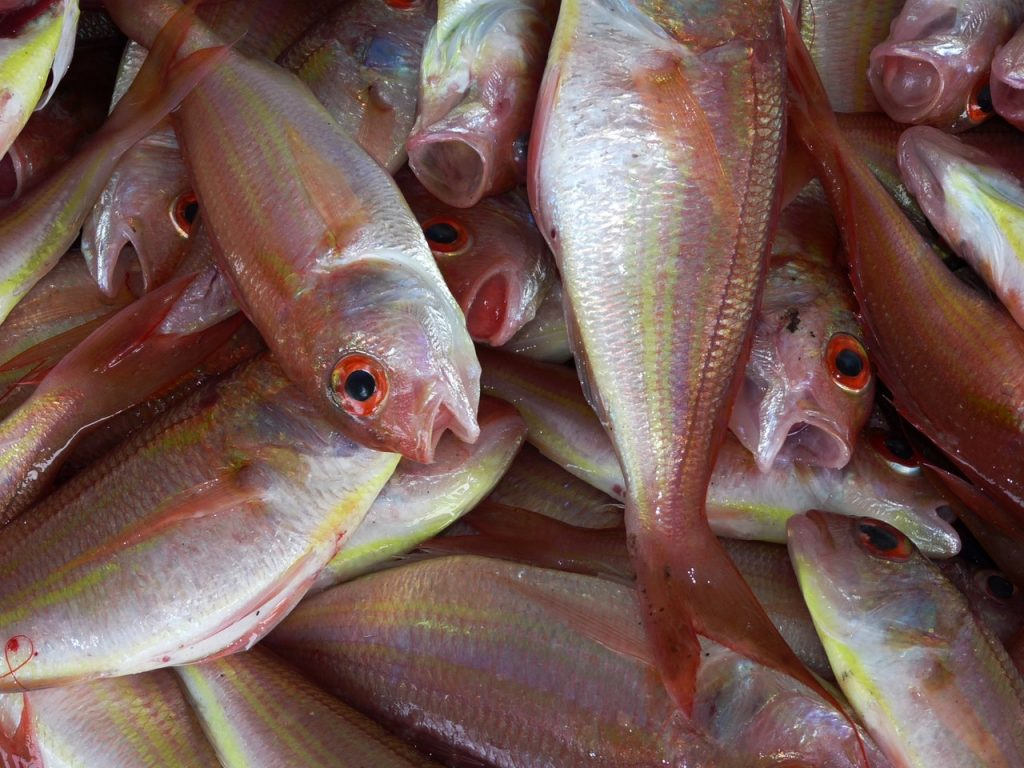 Best_Fish_to_Buy_Frozen_in_Marathon_quality_products